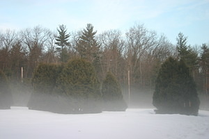 2008-01-08 - Winter Haze