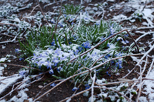 2014-04-16 - Mid-April Snow