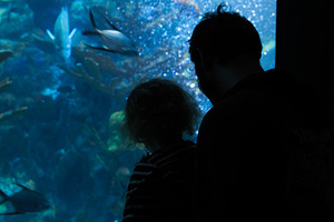 2016-12-31 - New England Aquarium