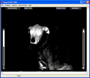 Thermal Images of the House, Dog & Us